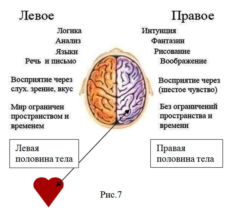 функции правого и левого полушария картинки
